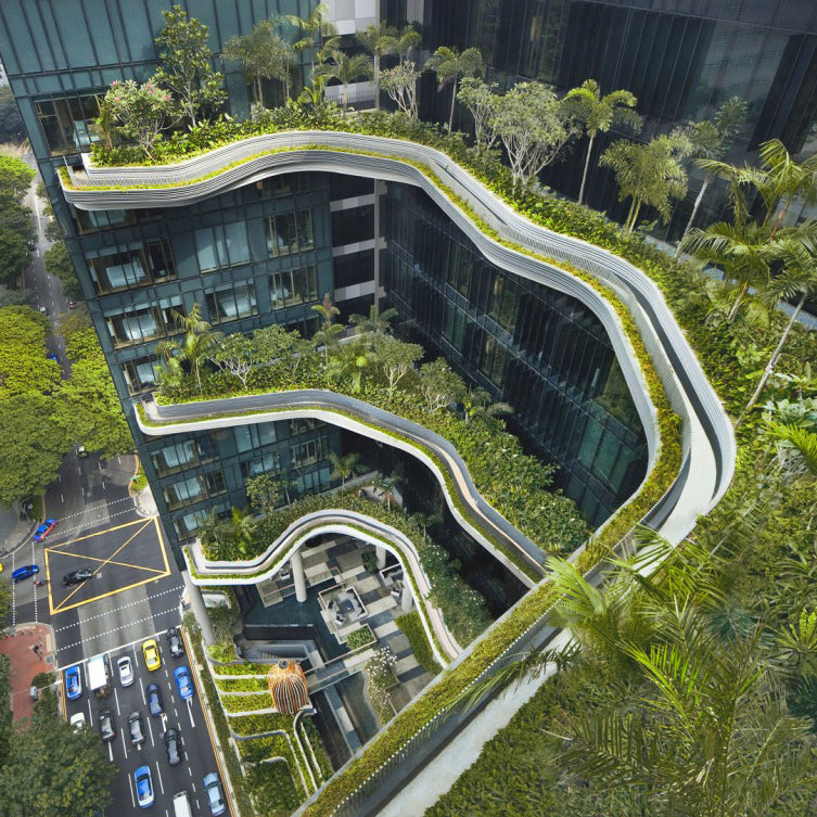 Biophilic Design: What it is and why it matters