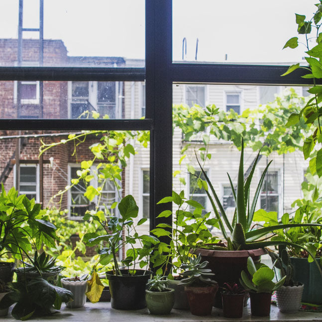 Urban Gardening: How to Garden in the City