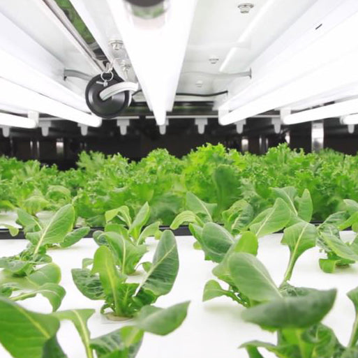 The Indoor Farming Revolution