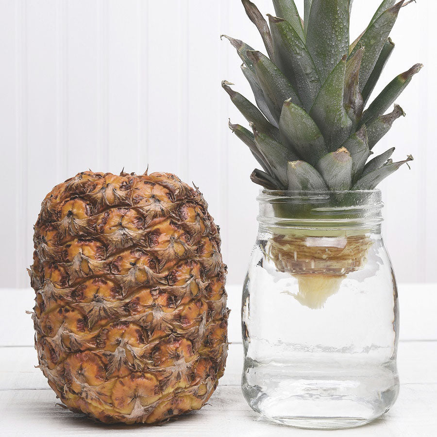 6 Kitchen Scraps You Can Regrow in Water