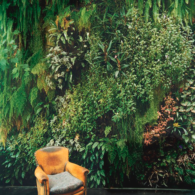 Wall Gardens: The Growing Trend