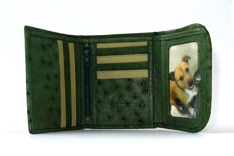 Dorothy  Trifold purse - Green ostrich skin leather ladies wallet inside view