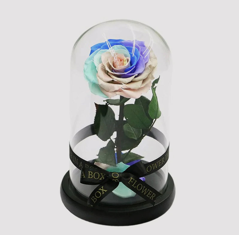 Enchanted Rose Dome Mini