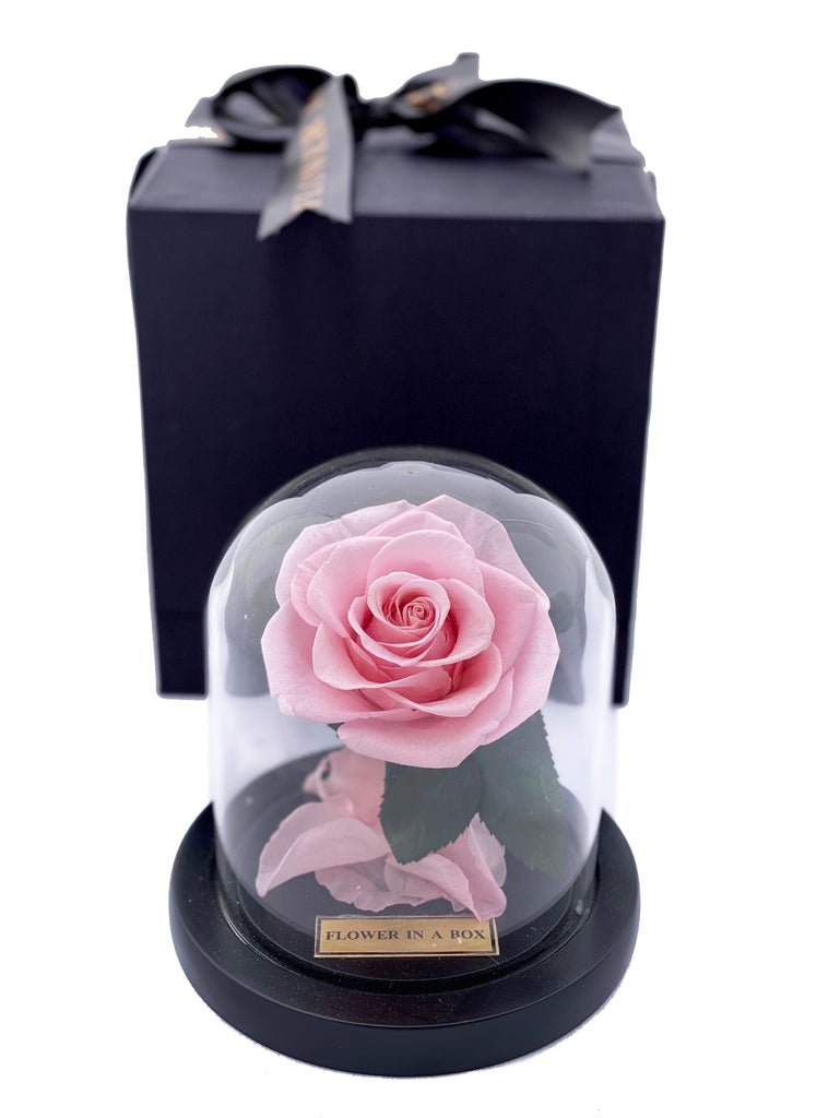 Enchanted Rose Tiny - LIGHT PINK - flower in a box