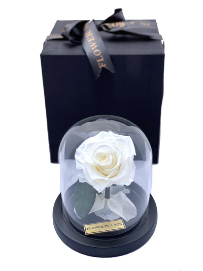 Enchanted Rose Tiny- WHITE - flower in a box