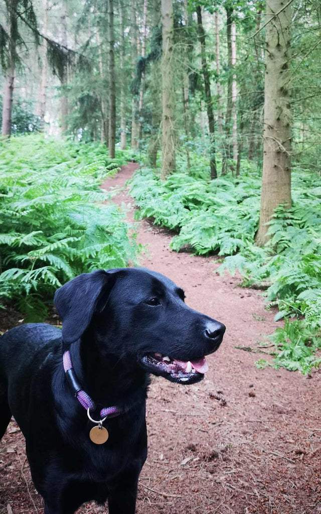 Dog walking at Chicksands bikepark