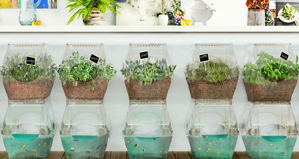 Grow Your Own Veggies With the Help of Your Fish Tank