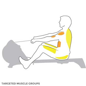 Targeted Muscles