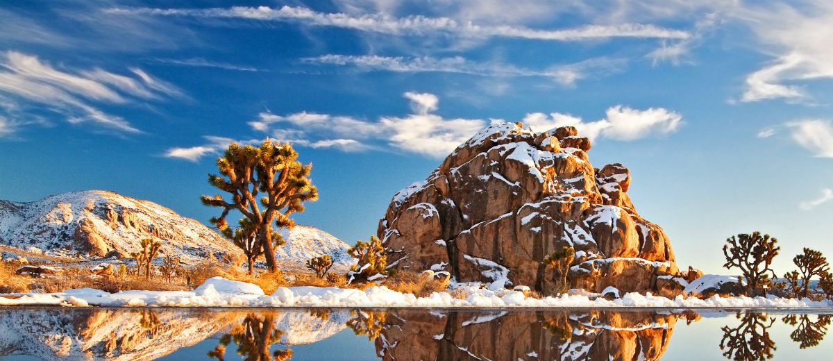 joshua tree winter