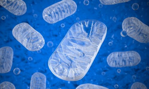 Mitochondria: Use Them or Lose Them