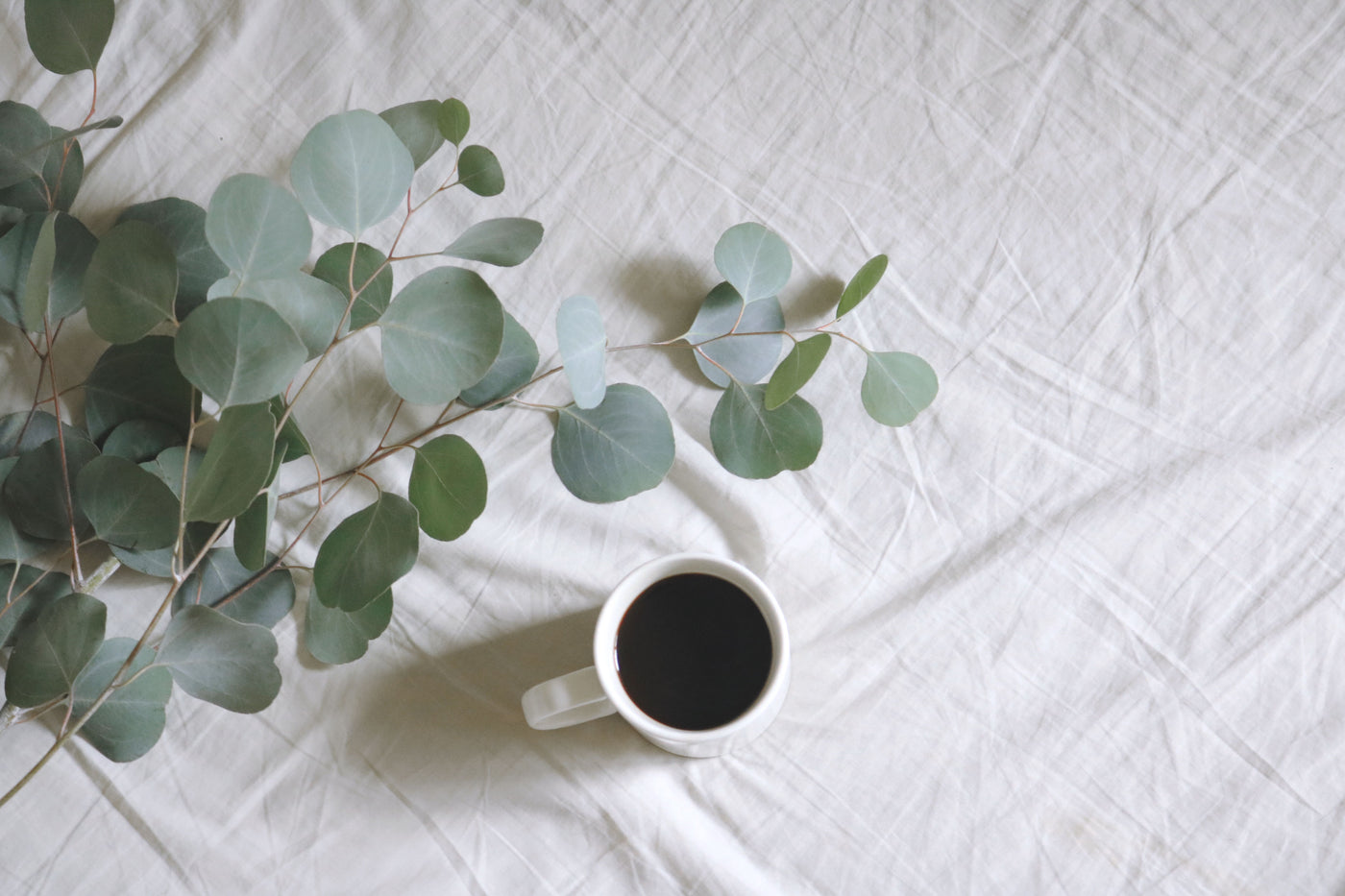 Eucalyptus Oil: Pain Relief from the Plant Kingdom