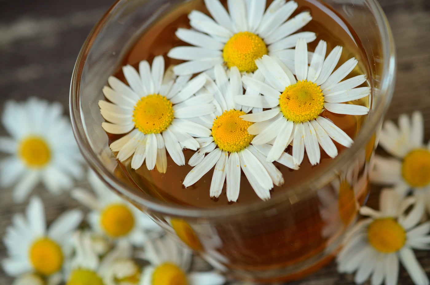 Chamomile – Bringing Rest to the Weary