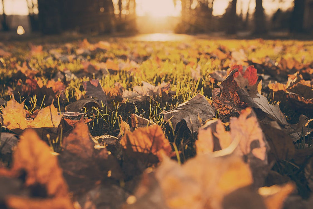 Autumn Allergies – Please Pass the Tissues