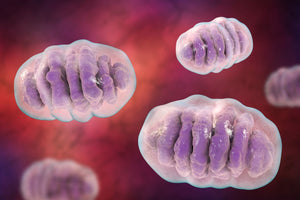 Mitochondrial Health and Energy