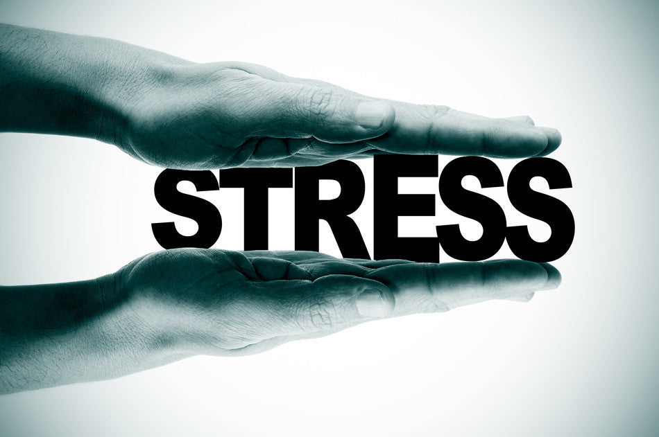 The Importance of Stress Reduction in the Maintenance of Wellness  and the Prevention of Chronic Disease