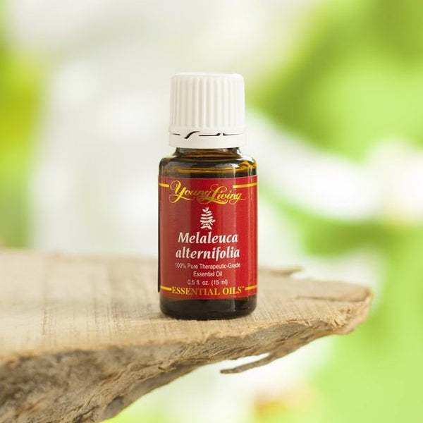 So what is Melaleuca alternifolia?