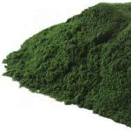 Chlorella Powder-Gourmet-in2ition mercantile