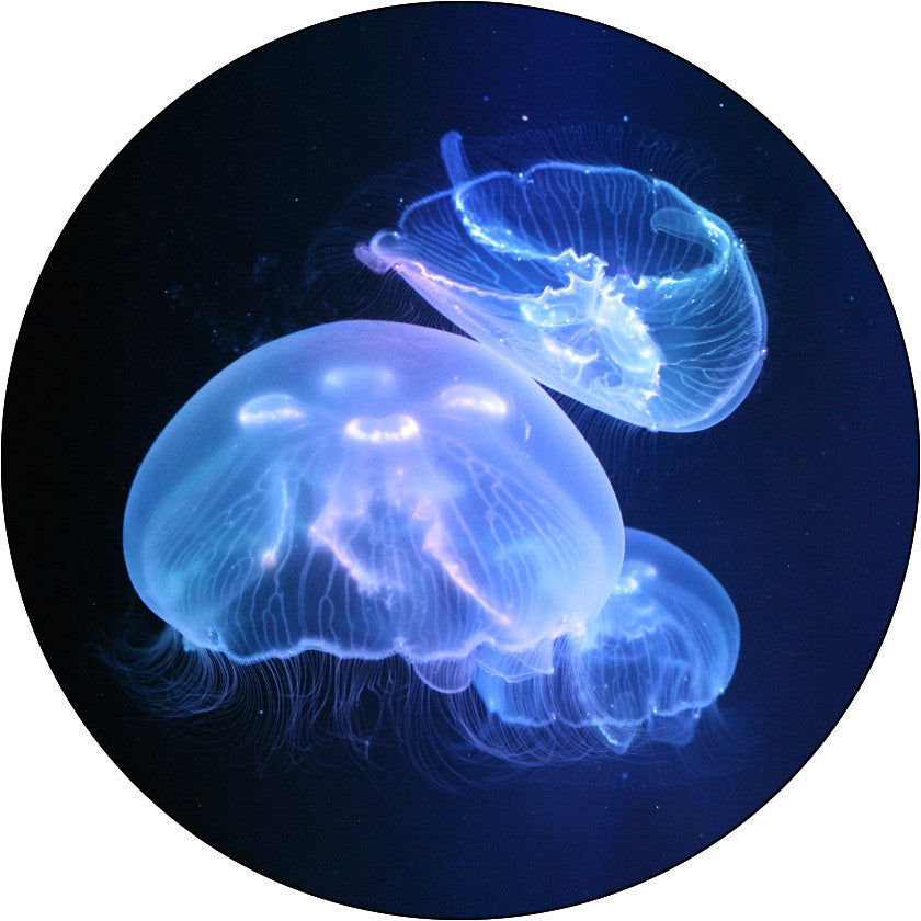 Jellyfish tanks live pet jellyfish for sale jellyfish art for Jelly fish painting