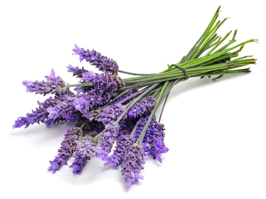 Herb - Organic Lavender, Freshly Harvested from our Schools Farm