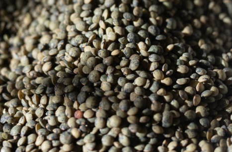 Grains - Rancho Gordo Heirloom French Style Green Lentils