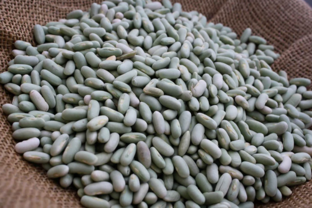 Beans - Rancho Gordo Heirloom Flageolet Beans