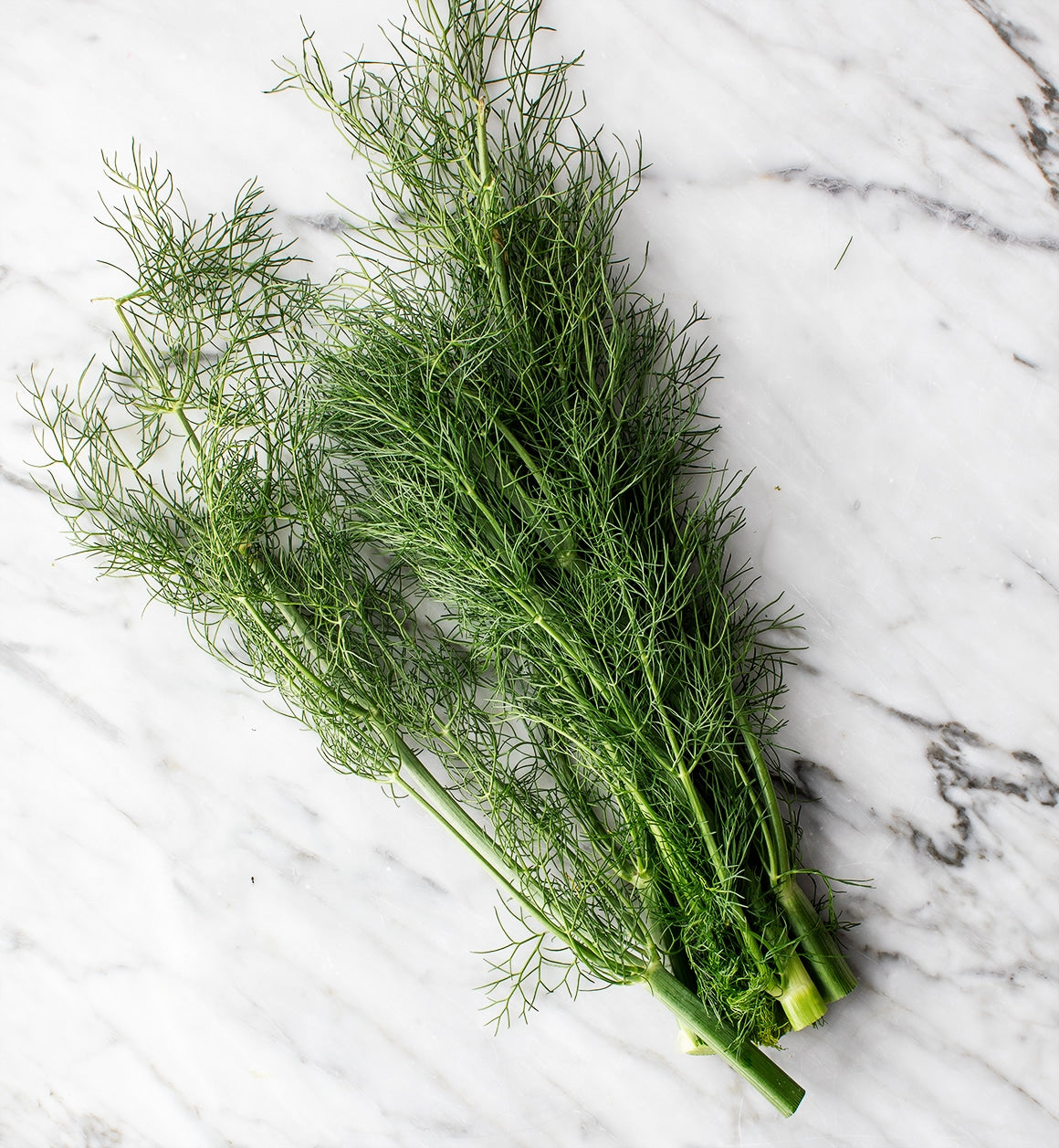 Herb - Organic Fennel Fronds, Freshly Harvested from Our Schools Garden