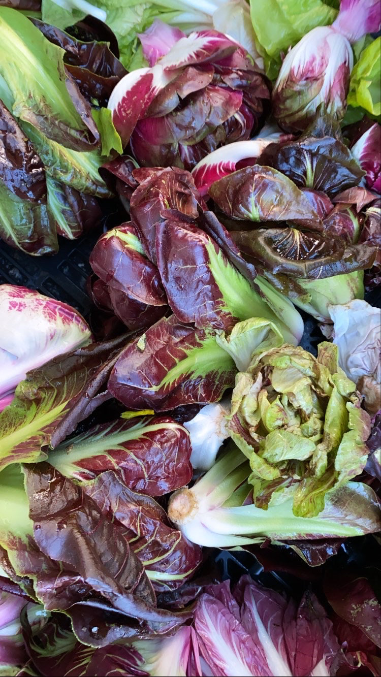Vegetable - Organic Radicchio