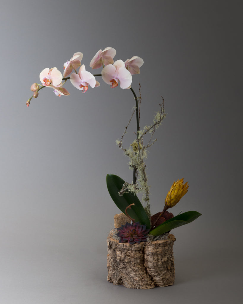 Orchid design with dry props in a bark container
