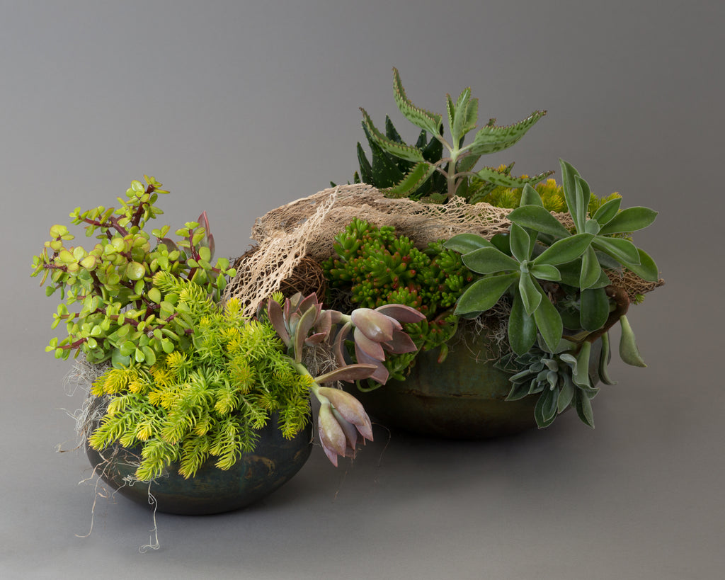 Eclectic succulent design with dry props