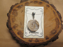 Drusy Fossilized Shell pendant