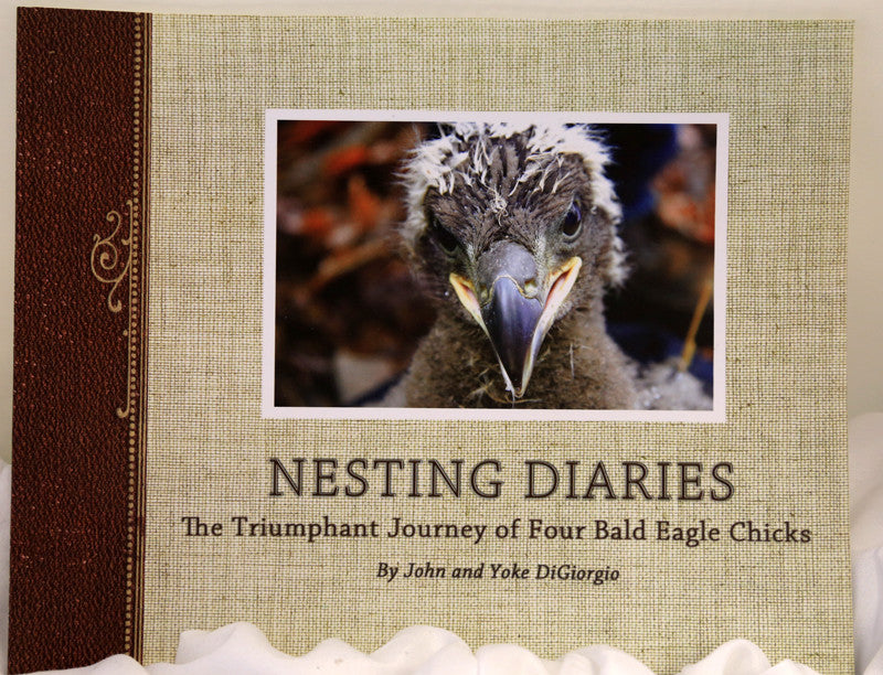 Nesting Diaries: The Triumphant Journey of Four Bald Eagle Chicks