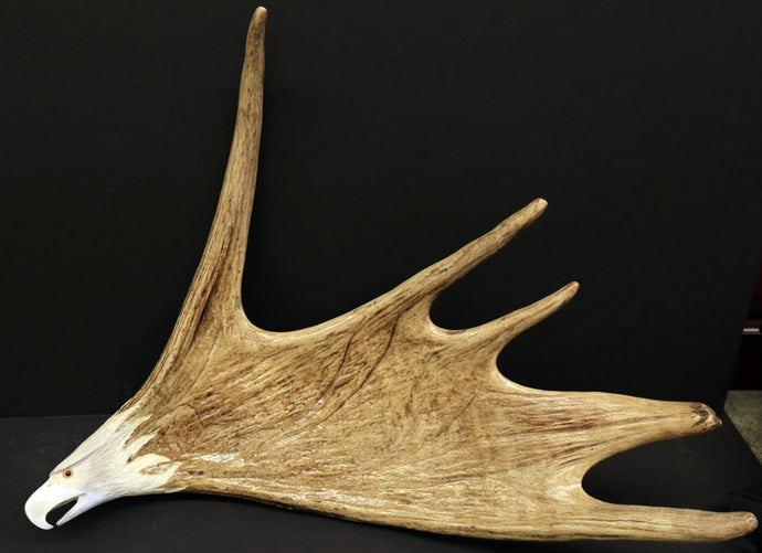 Medium sized hand carved moose antler--eagle head wall hanging