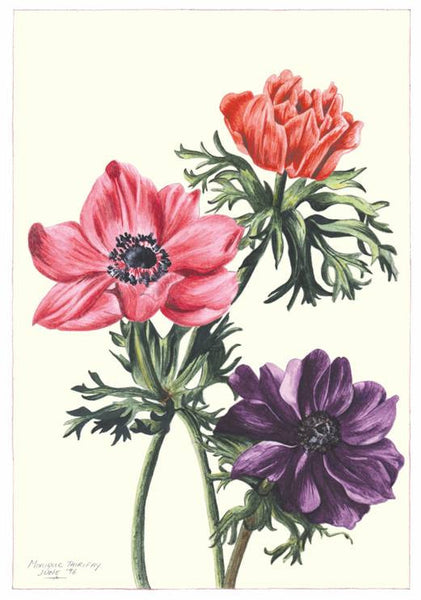Note Card - Anemone