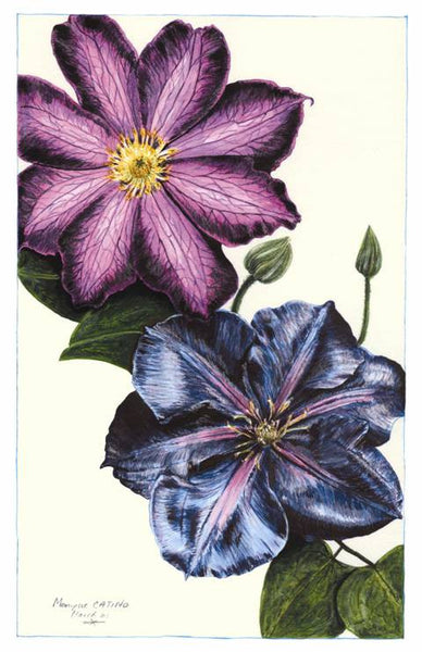 Note Card - Clematis