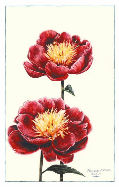 Note Card - Peonies