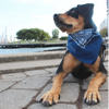Dog Bandana - Personalized - Chain Stitch Font