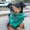 Dog Bandana - Personalized - Simple Font