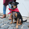 dog bandana personalized monogrammed