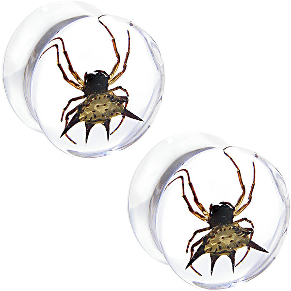 5/8 Clear Resin Organic Real Spider Saddle Plug Set