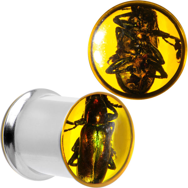 00 Gauge Stainless Steel Amber Resin Real Beetle Inlay Plug Set