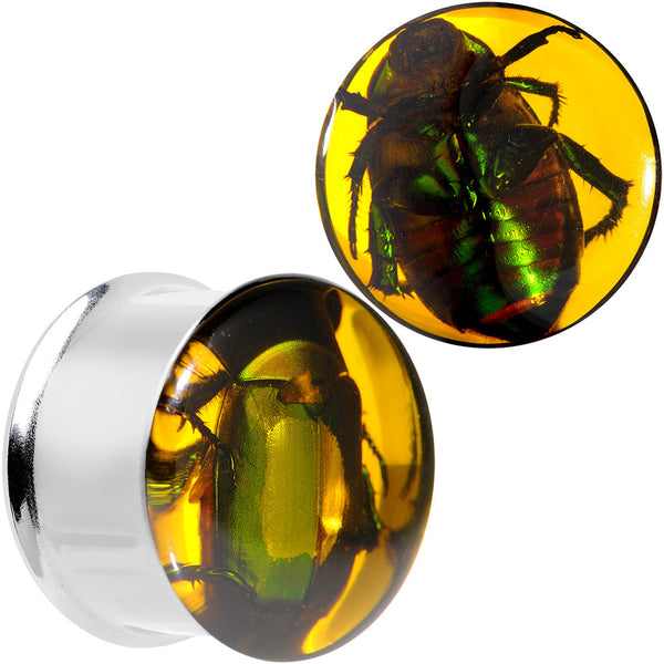 "3/4"" Stainless Steel Amber Resin Real Beetle Inlay Plug Set"
