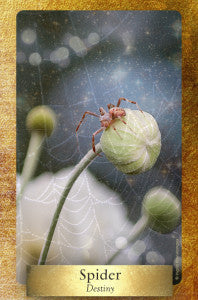 The next time you see a spider web remember the message of Spider Woman and her loom. Dewdrops on the web are reminders of the many choices you will make along this life, this strand of your journey. There are no wrong choices!