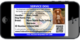 Service Dog - Standard Package (Bundle and Save $24)