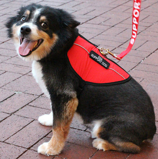 Support Animal Image X on Emotional Support Dog Harness