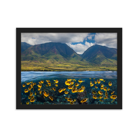 Butterflyfish Below by David Fleetham Framed matte paper poster