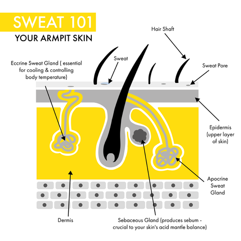 what is sweat? The science behind the sweat glands