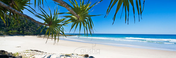 Pandanus palms provide shade along the beaches of Broken Head south of Byron Bay.