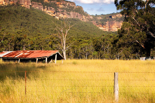 Photo of Megalong Valley BM0334 - Gusha