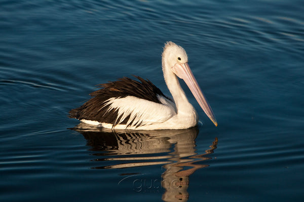Photo of Pelican CC2119 - Gusha