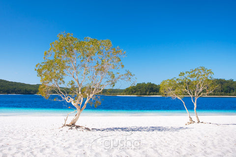 Photo of Lake McKenzie FI0370 - Gusha
